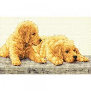 70-35309 Golden Retriever Puppies